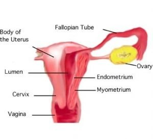 Period pain... What's normal? - Menstrual Matters